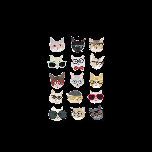 แมวใส่แว่น